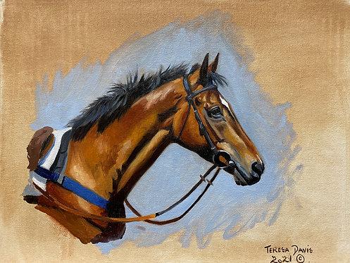 Race horse study
