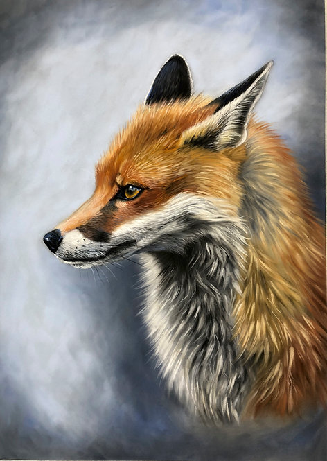 'Charlie' Red fox