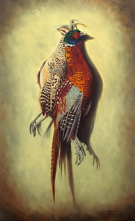 Brace of Pheasants
