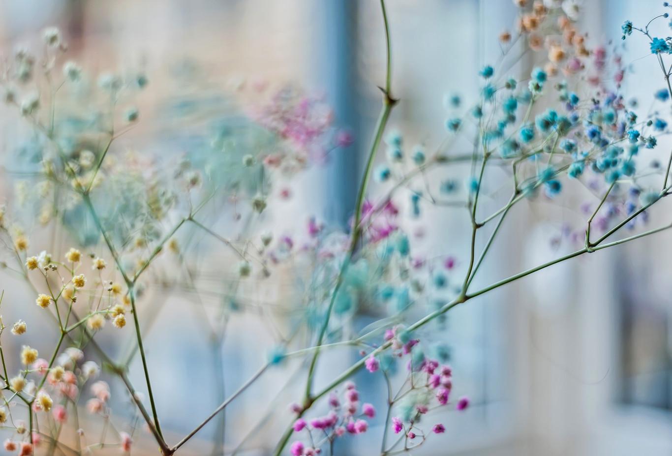 Blomster 008.jpg