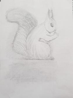 Белка, карандаш, Автор: Евгений