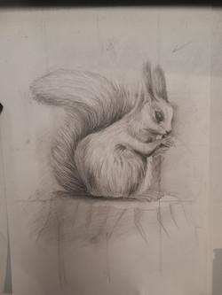 Белка, карандаш. Автор Анна Ермачкова