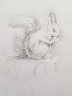 Белка, карандаш. Автор: Виктория
