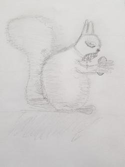 Белка, карандаш. Автор: Евгений
