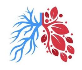 Пересадка (трансплантация) легких