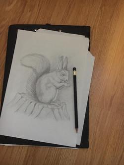 Белка, карандаш. Автор: Оксана