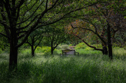 """""""Sitting quietly, doing nothing, Spring comes, and the grass grows, by itself.""""      -  Matsuo Basho"""