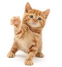 cat grooming | spokane paw prints | Spokane, WA 99202