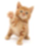 spokane paw prints grooming | 706 N Napa street Spokane, WA 99202 | Cat grooming