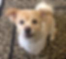 dog grooming, spokane paw prints grooming,