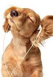 spokane paw prints grooming | cat and dog grooming | grooming