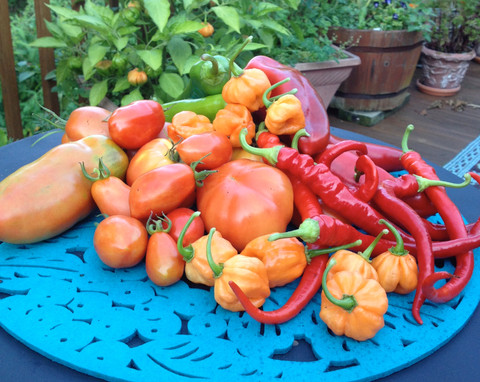 Awesome and Easy Hot Pepper Sauce