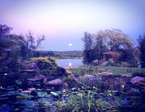 moon over lotus pond BMRR Ithaca NY