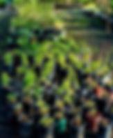 Dry Creek Nursery-edit.jpg