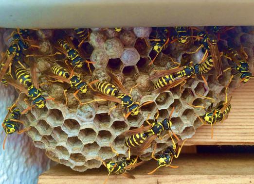 Wespenwerk