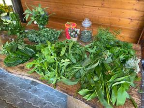 Auswahl Frühlingsgrün