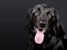 dog grooming cheshire