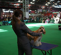 Crufts dog