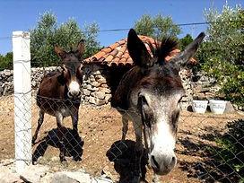 Olives & ânes, Kotor & village de Tici - Péninsule de Lustica