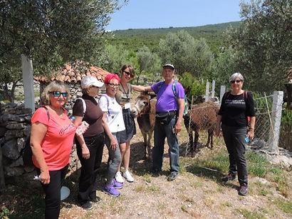 Olivos y burros Kotor y Tici village - península de Lustica