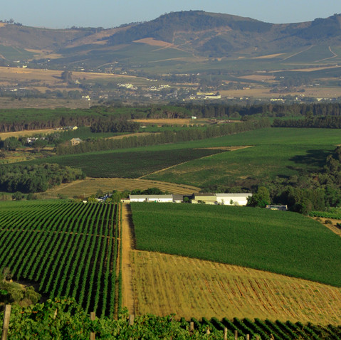 Wineries and Winelands in and around Somerset West