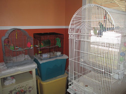 Inside cages