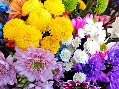 Colorful different chrysanthemum flowers