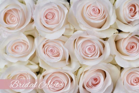 DSC_0838 Bridal Akito.jpg