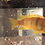 Thumbnail: Assorted African Cichlid