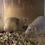 Thumbnail: 2 Fancy Rats