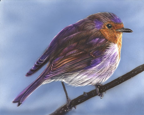 Robin Study