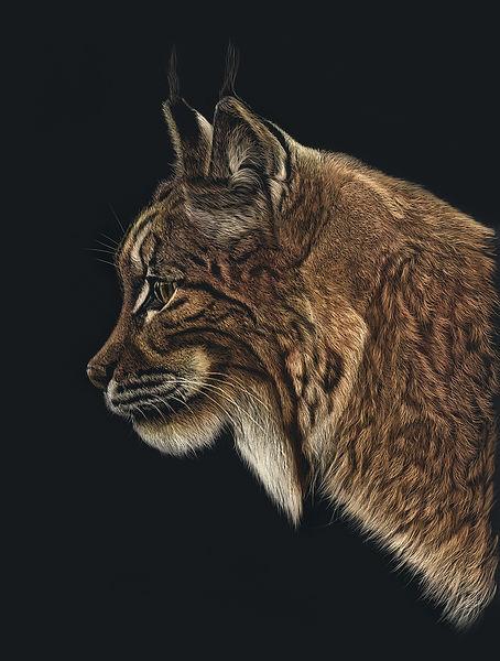 Lynx_colour_LR.jpg