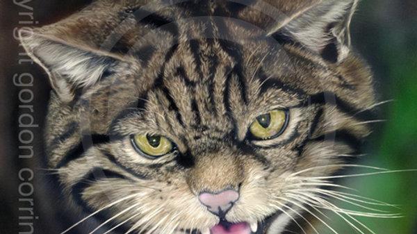 The last stand - Scottish Wildcat Giclée Print