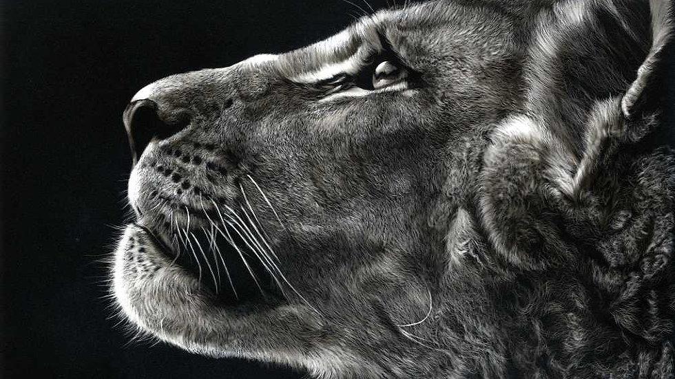 Future King - by Scottish Wildlife Artist Gordon Corrins