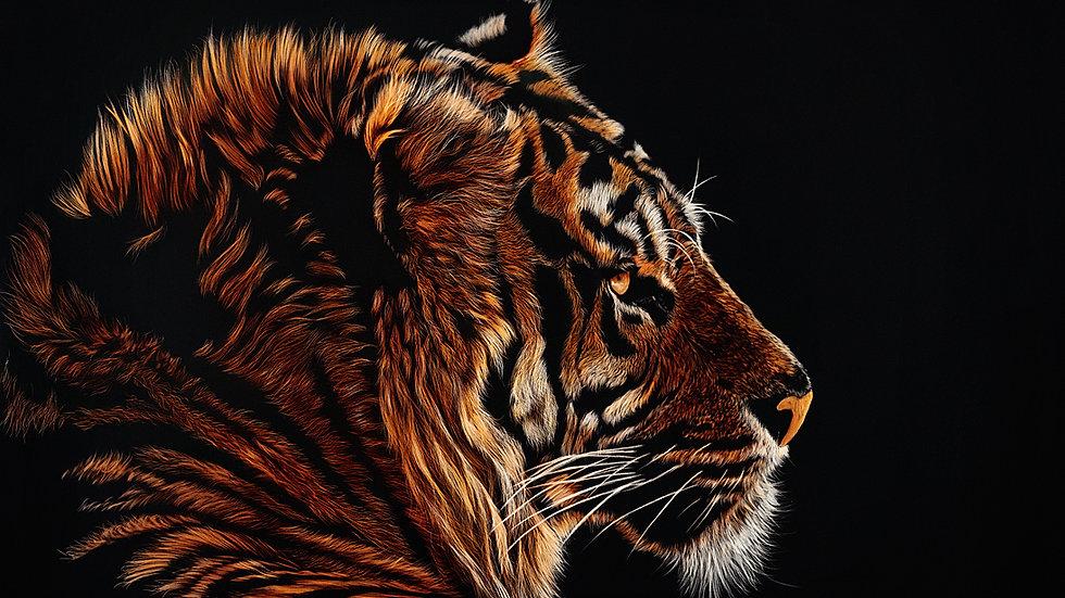 British Wildlife Artist Sumatran Tiger