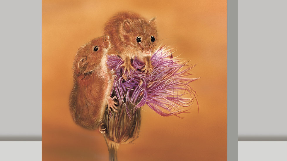 Greetings Card - Mr and Meeces