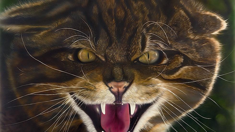 Scottish Wildcat - by Scottish Wildlife Artist Gordon Corrins
