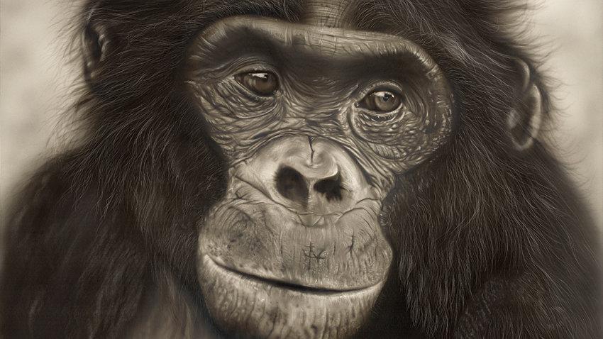 Alfie - Bonobo