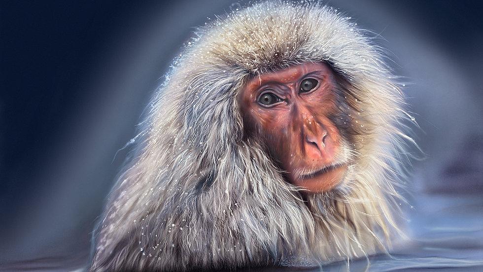 British Wildlife Artist Japanese Macaque Painting