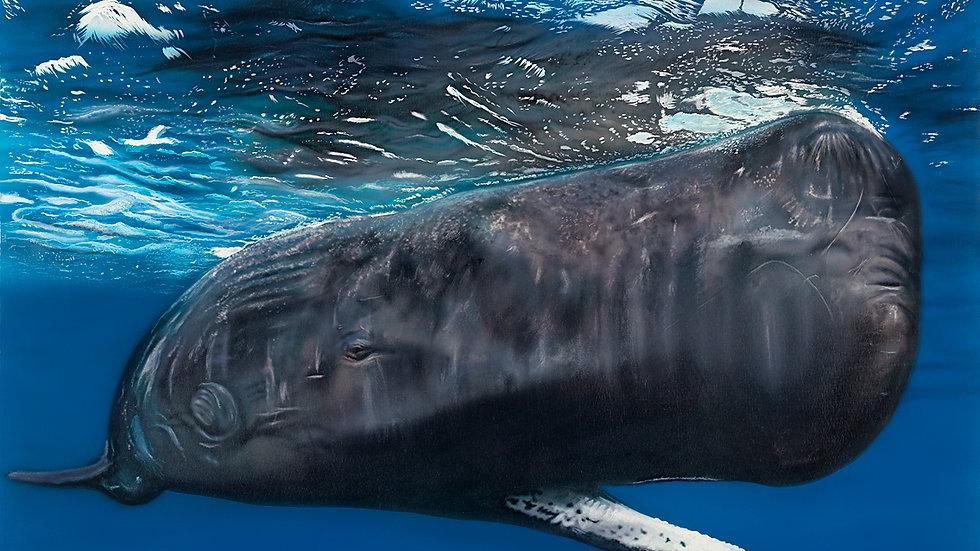 British Wildlife Artist Sperm Whale Painting