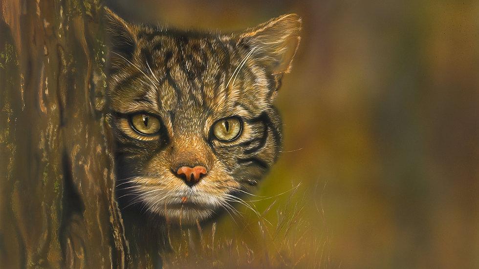 British Wildlife Artist Scottish Wildcat