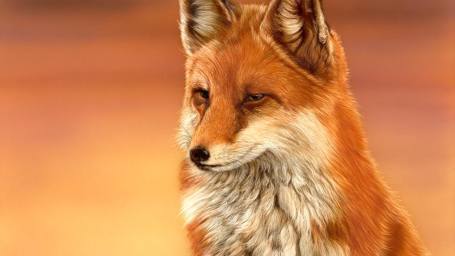 Mrs FoxLR.jpg