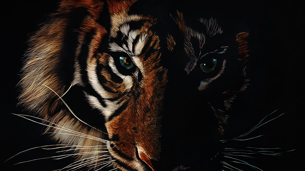 British Wildlife Artist Sumatran Tiger painting