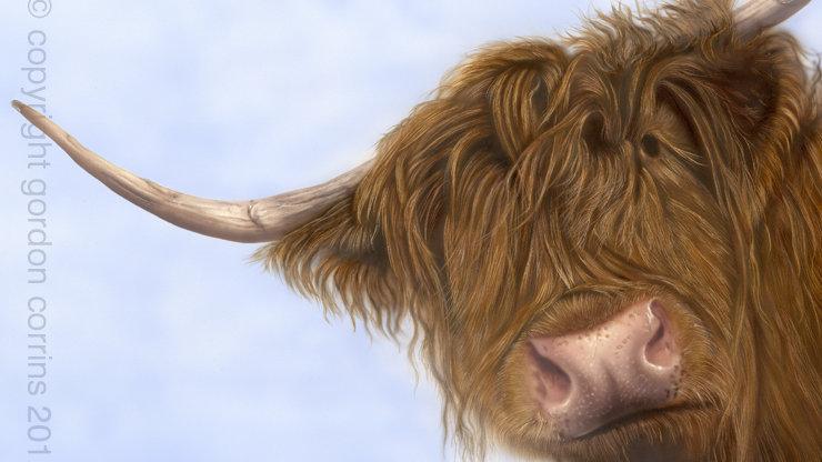 British Wildlife Artist Highland Cow