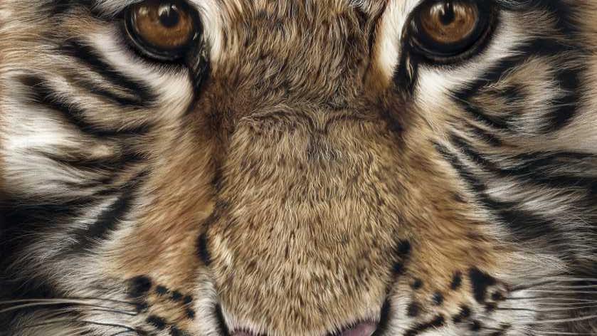 Honey - by Scottish Wildlife Artist Gordon Corrins