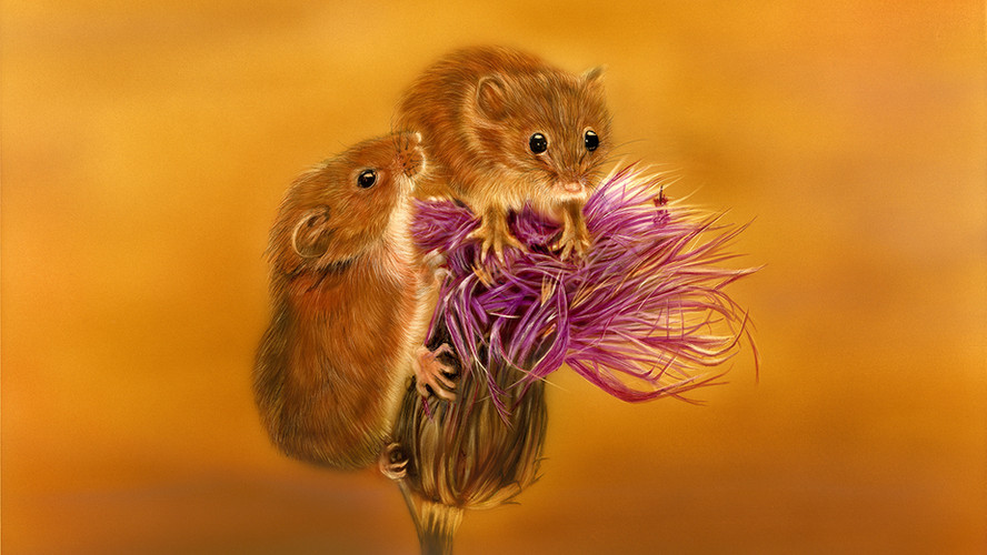 Mr and Meeces.jpg
