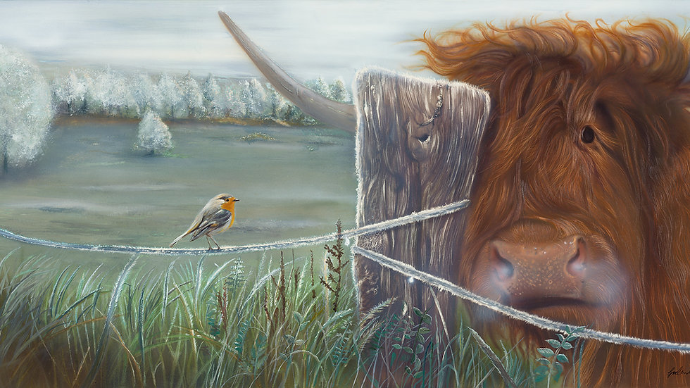 British Wildlife Artist Highland Cow