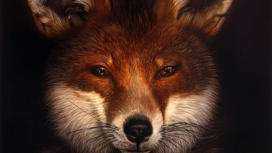 Peter the Fox.jpg