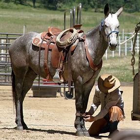 Hobbled Horse