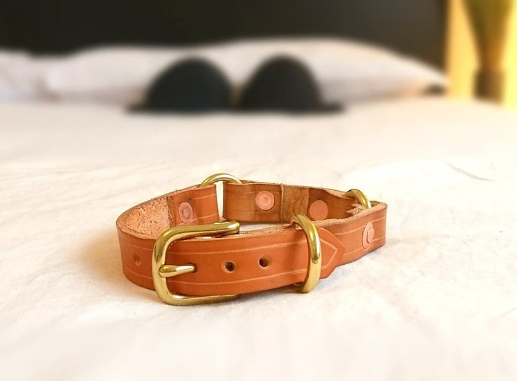"""Lil' Toffee Collar 3/4"""" (19mm) Wide"""